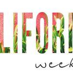 California Font Family