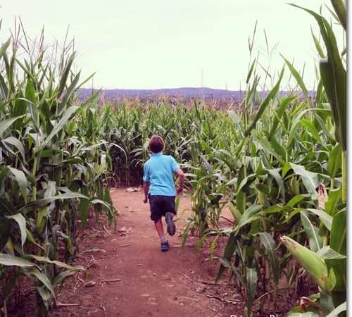 Wordless Wednesday With Linky: Corn Maze Fun