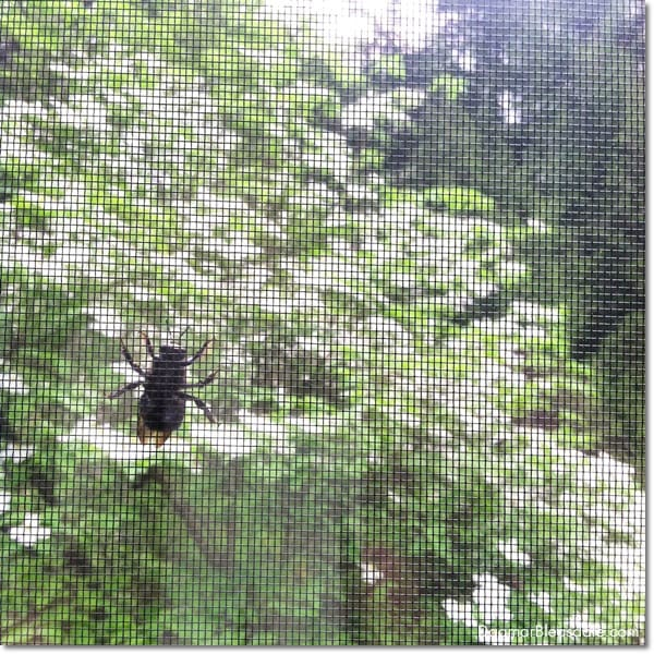 bumble bee on window