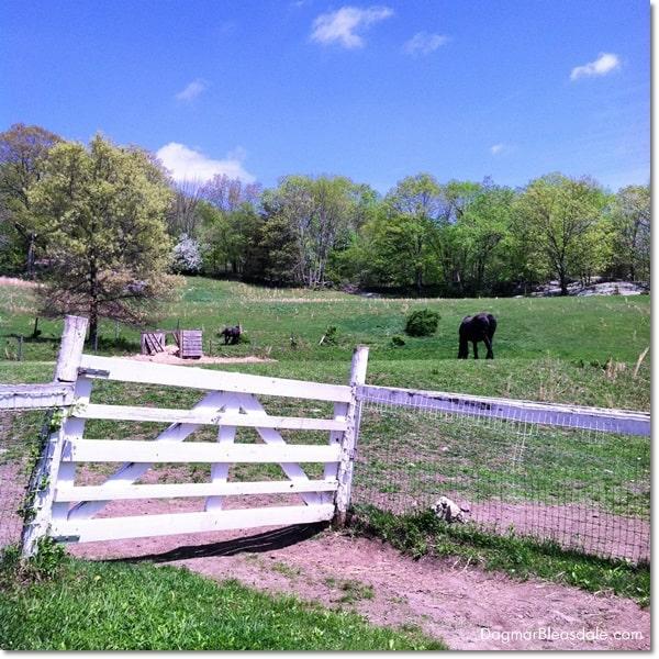 Muscoot Farm, Katonah, NY