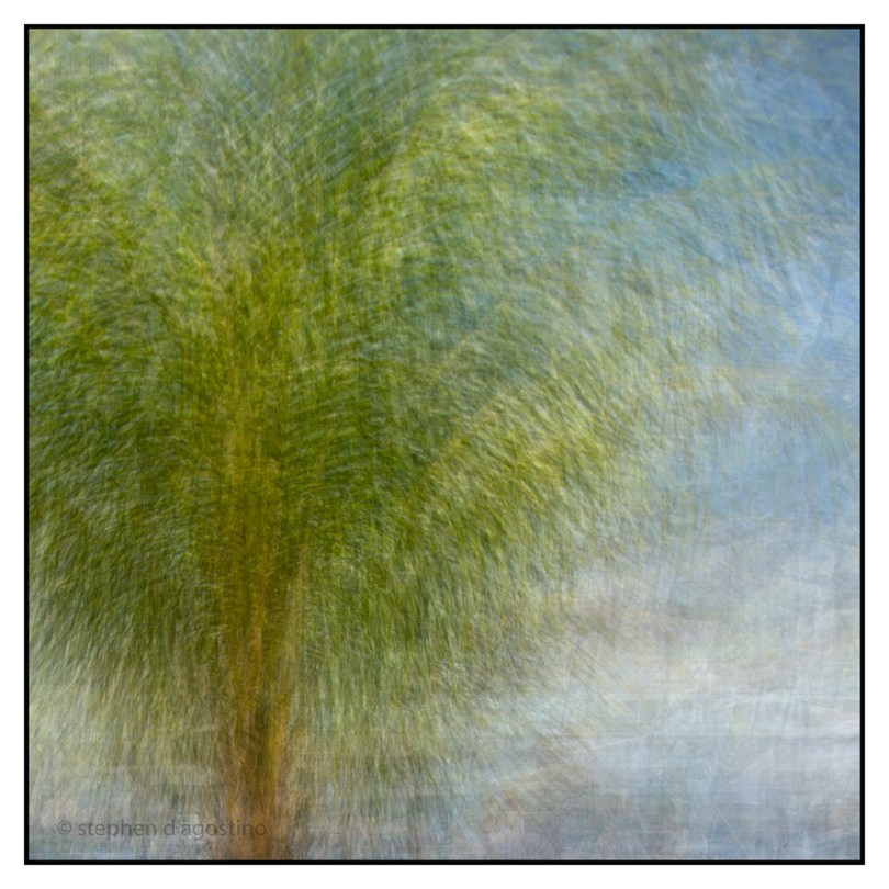 A palm tree in St Lucia, photographed impressionistically using the in the round montage technique. © Stephen D'Agostino