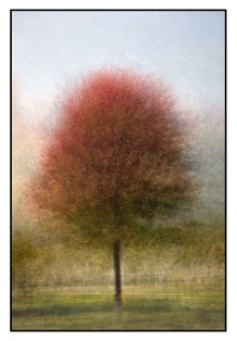 A tree in fall colours, Lakeshore Blvd.,Toronto, photographed using the in the round montage technique. © Stephen D'Agostino.