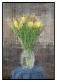 A photo impressionistic image of tulips photographed using the in the round montage technique. © Stephen D'Agostino.