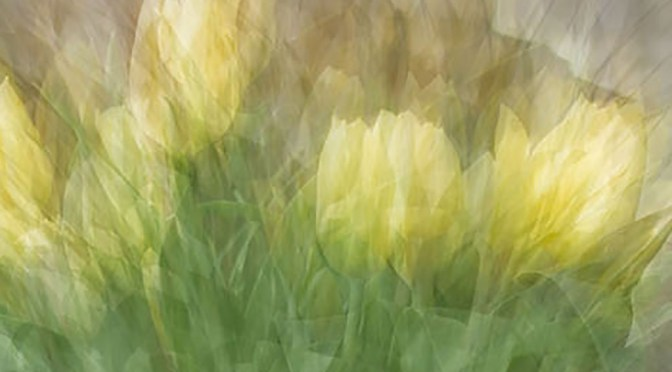 Tulips On The Round - an example of in-the-round montage photo impressionism