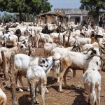 Sport Radio 88.9 Brela FM: A Man Committed Sussed Because of Sallah Celebration
