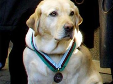 NVMA 2017: Heroic Dog wins Award for Stopping Suicide Bomber