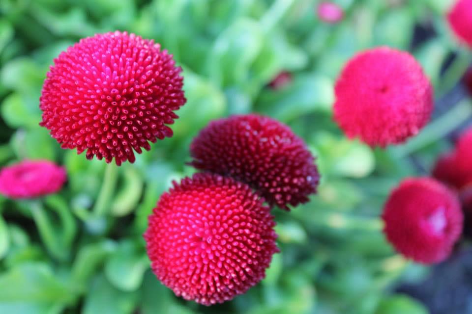 Christchurch_Botanic_Garden