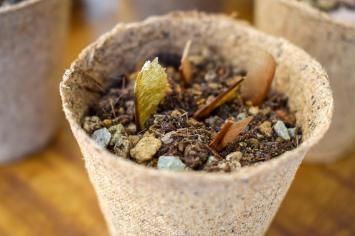 watered_seeds_in_container