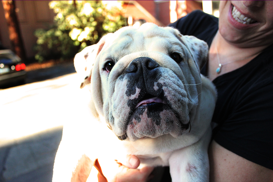 College Cats And Dorm Dogs The Daily Californian