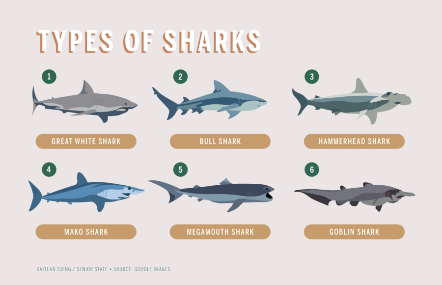 infographic about sharks
