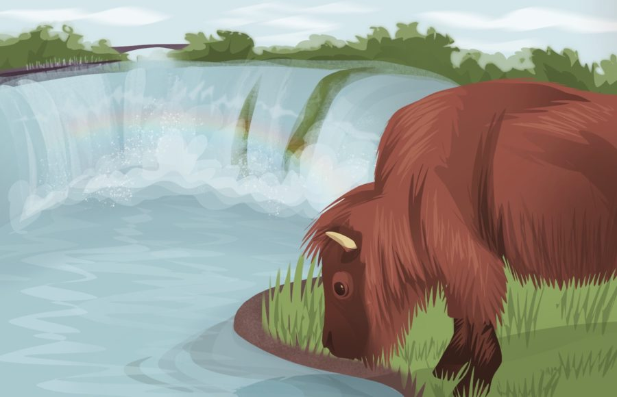 Illustration of a buffalo leaning down to sip water from the Niagara River, with the Niagara Falls in the distance
