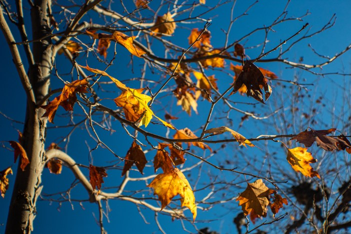 Photo of autumn leaves on a tree branch