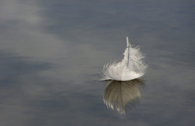 Photo of a feather