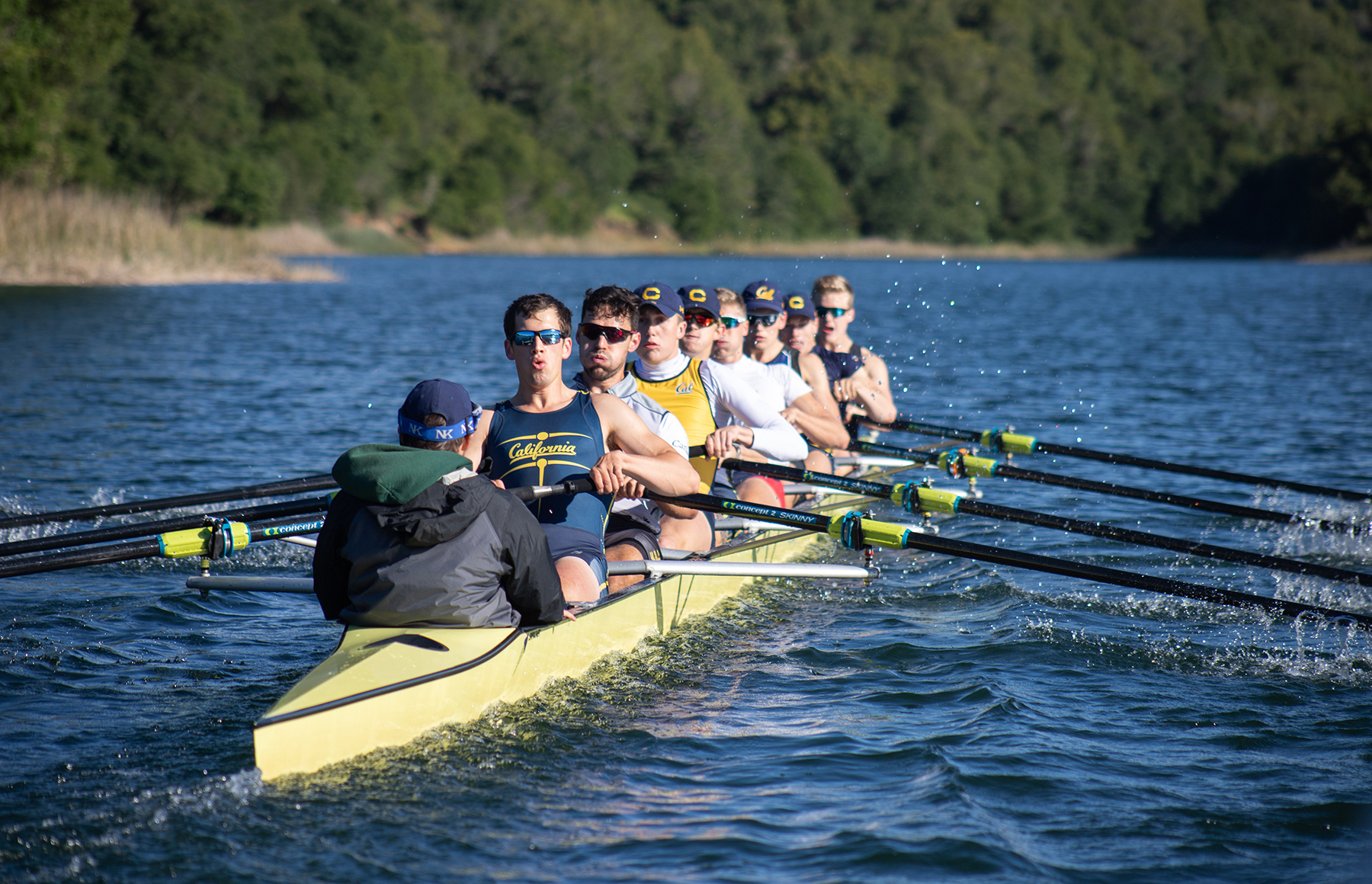 Photo of Cal Men's Rowing team