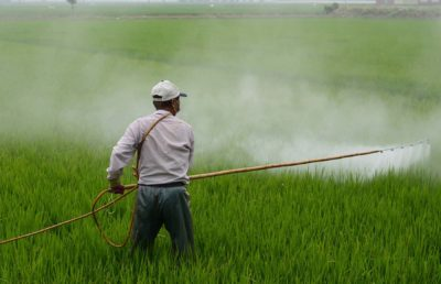 Photo of a man standing in a field spraying herbicide