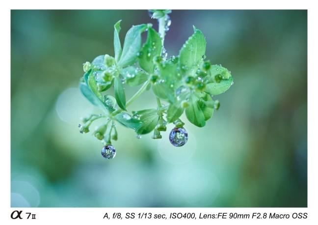 Sony-FE-90mm-f-2.8-macro-lens-sample-images-04