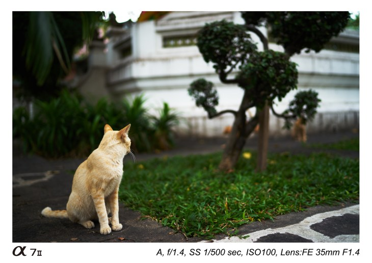 zeiss-distagon-t-fe-35-mm-f1-4-za-lens-sample-images-01