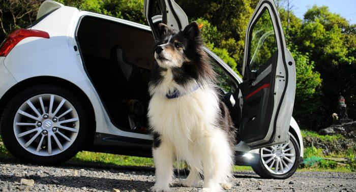Dog in a car - puppet - dailycarblog.com