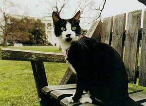 Chelsea Clinton's cat, Socks. Taken by a White...