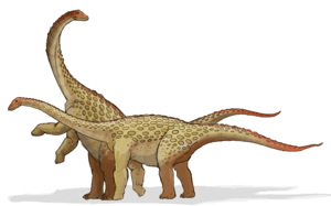 "Saltasaurus (which means ""lizard from Salta"") was a sauropod dinosaur of the Late Cretaceous Period. Relatively small among sauropods, though still massive by human standards, it was characterized by a diplodocid-like head (Photo credit: Wikipedia)"