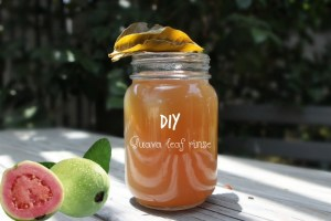 Miracle DIY Guava leaf rinse to stop hair fall