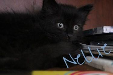 Dini   Black Cat