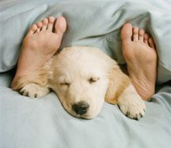 How Long Do Puppies Sleep A Day Patterns Habits Places - Puppies sleeping