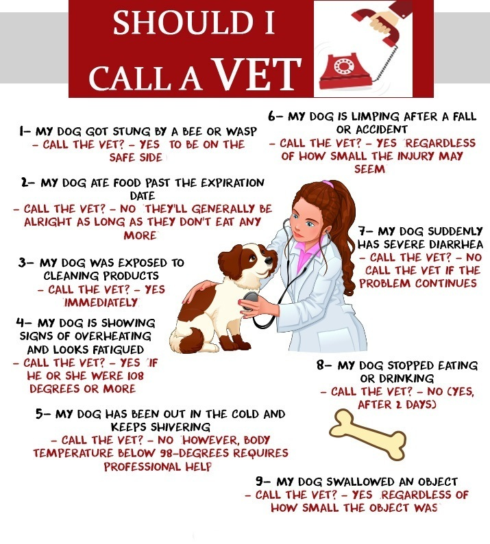 Should i call a vet infographic