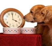 dog routine feeding time