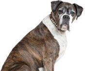 senior dog not eating