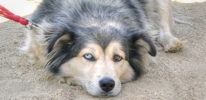 Dog with 1 eye going blind
