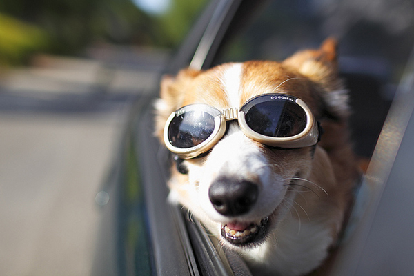 Image result for dog happy