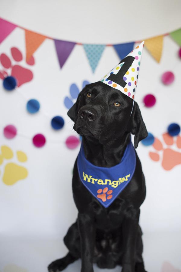 Dog Pawty Annie & Wrangler's Pupcake Smash Daily Dog Tag