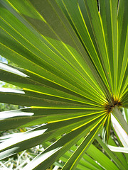 Supplementing with Saw Palmetto
