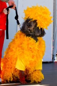 Daily Fluff: Dog worried Big Bird Halloween costume is too ...
