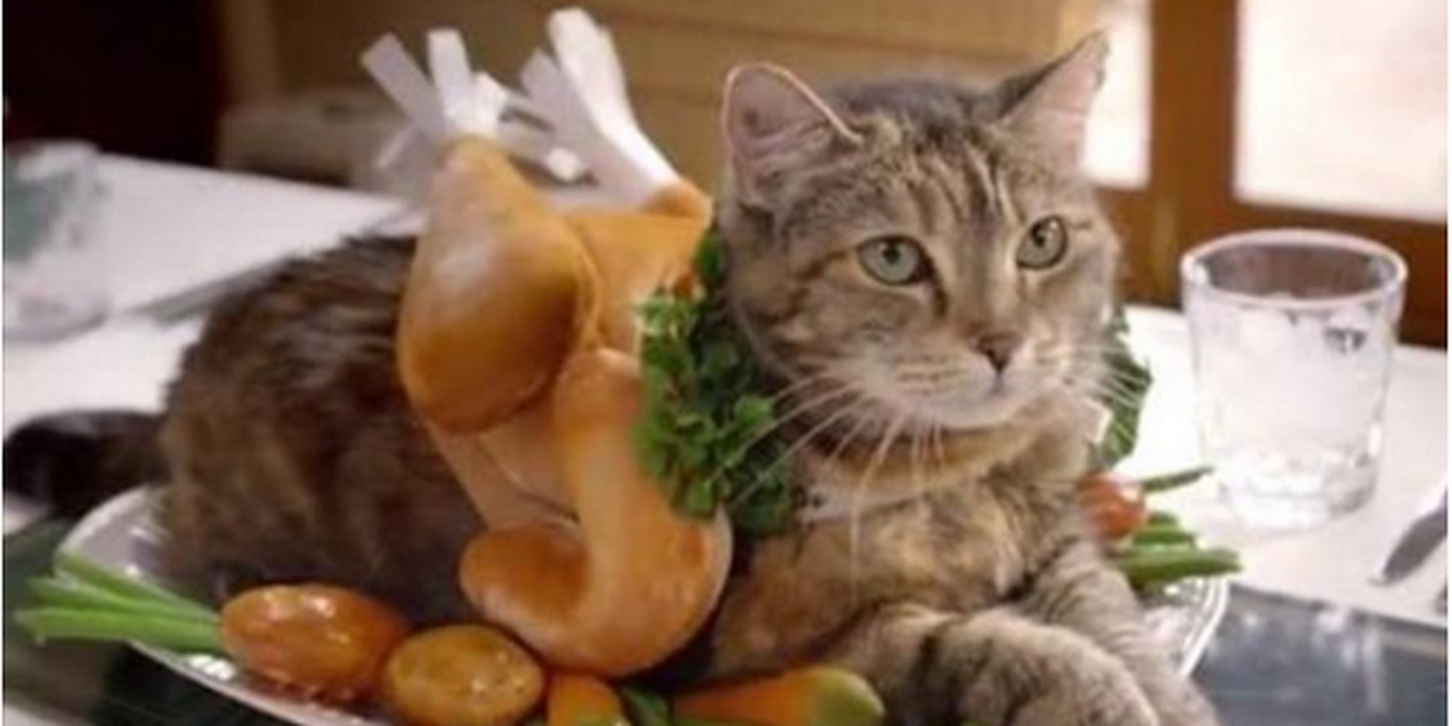 Super Cute Puppies And Kittens Wallpaper 7 Cats Dressed Like Thanksgiving Turkeys The Daily Dot