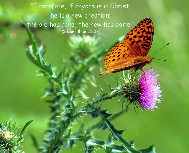 Butterfly with Scripture verse (Photo by Greg Schneider)