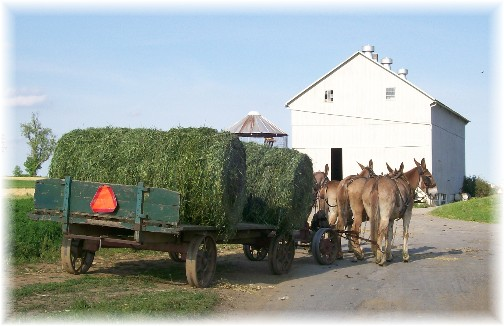 Amish alfalfa harvest 5/11/11
