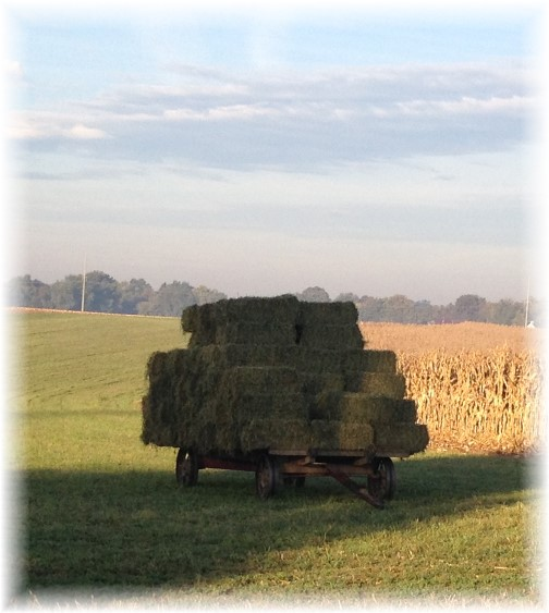 Amish alfalfa wagon 10/22/15