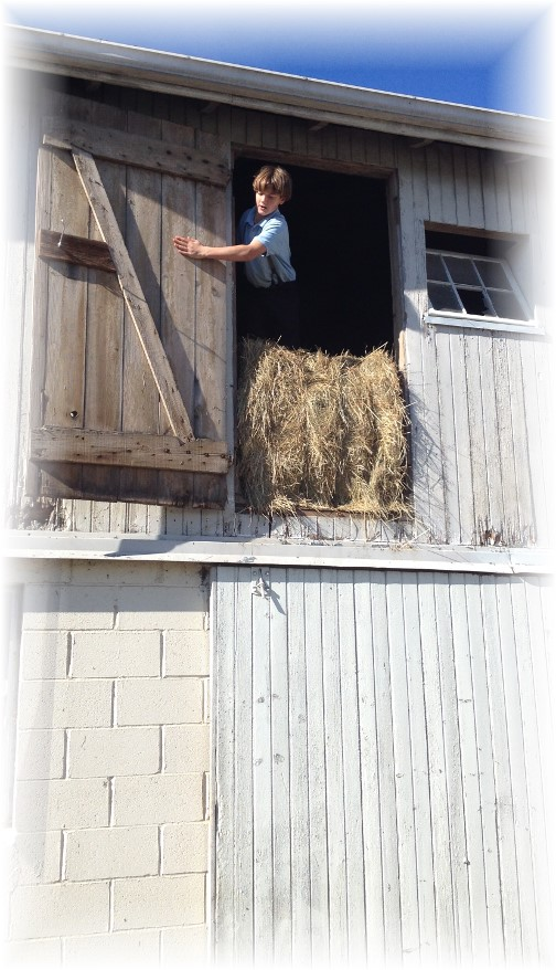Amish boy in Lancaster County hay loft 11/8/14