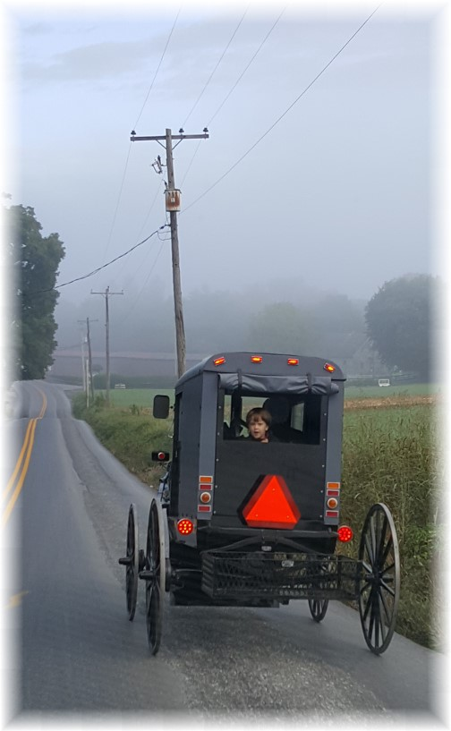 Amish buggie on foggy morning near Paradise, PA 9/28/16