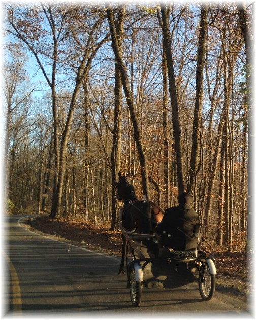Amish man on cart in eastern Lancaster County PA 11/14/15