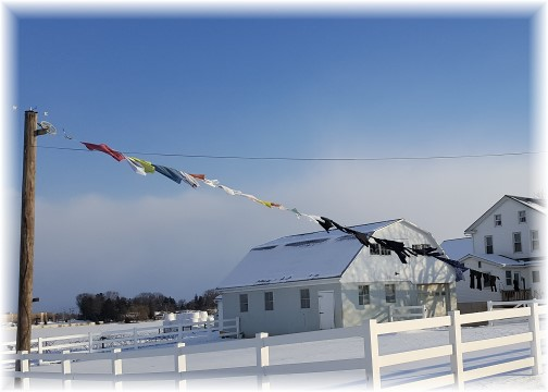 Amish clothesline in snow 2/11/16 (Click to enlarge)