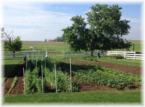Amish garden 6/4/14
