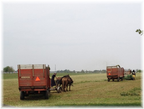 Amish couple harvesting hay 5/16/15