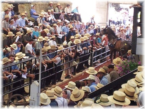 Amish horse auction (photo by Lee Smucker)