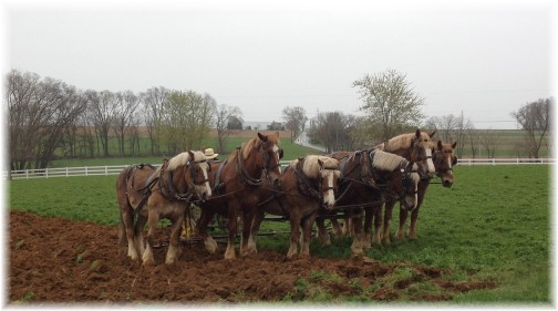 Amish neighbor plowing on Kraybill Church Road 4/25/14 (click to enlarge)