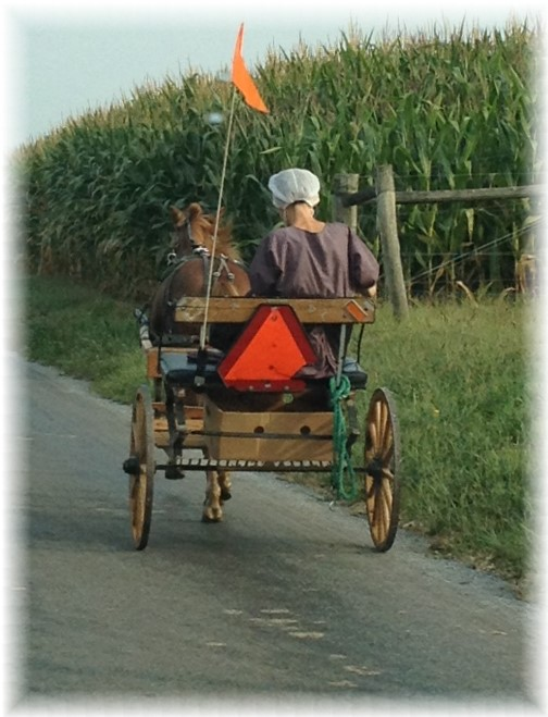 Amish cart after dropping kids off to school 9/2/15