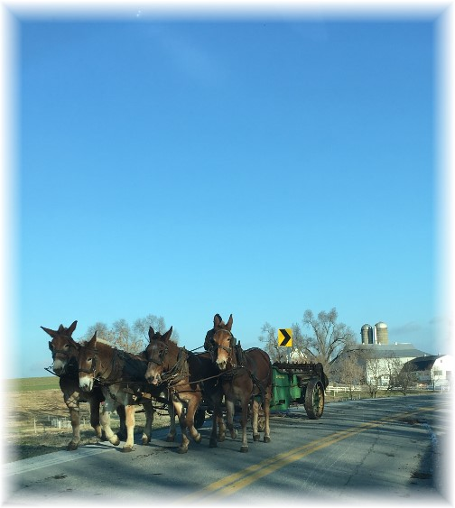 Amish work team 12/14/16