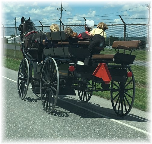 Amish spring wagon near Gratz, PA 6/20/17